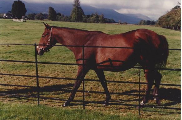 Sharon's horse